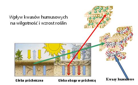 Wpływ kwasów humusowych na wilgotność gleb i wzrost roślin