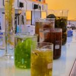 nawozy z alg