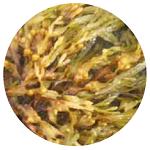 nawozy z alg morskich