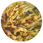 nawozy-z-alg-morskich-m