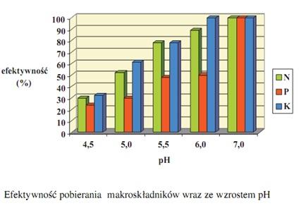 efektywność pobierania makroskładników burak cukrowy