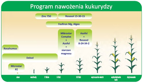 program nawożenia kukurydzy