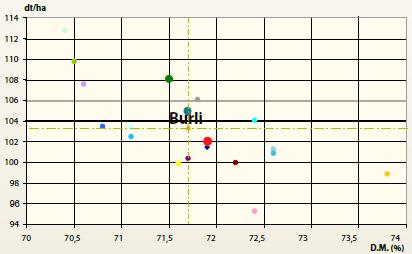 odmiana kukurydzy Burli wyniki doświadczenia PDO