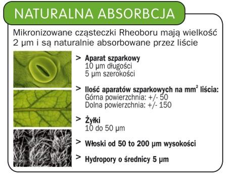 naturalna-absorbcja