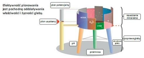 diagram 1 efektywność plonowania