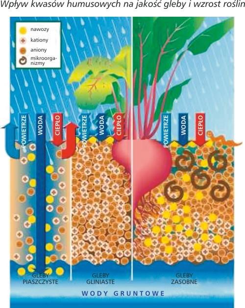 kwasy humusowe diagram