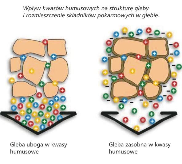 struktura gleby diagram