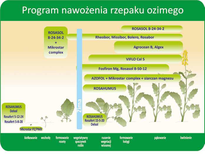 program-nawożenia-rzepaku-ozimego