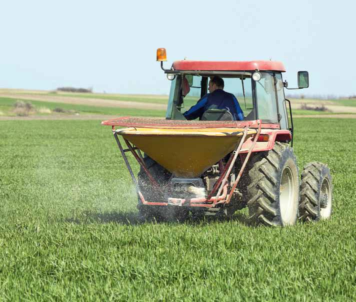 Strategia nawożenia pszenicy ozimej azotem