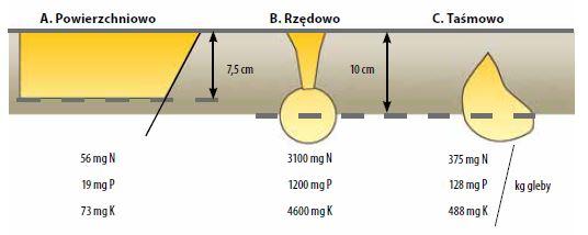 Wpływ sposobu umieszczenia nawozu w glebie na stężenie składników pokarmowych (Murphy i Dibb 1986)