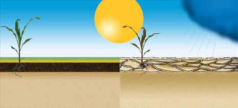 Po lewej: Gleba bogata w próchnicę Po prawej: Gleba uboga w próchnicę