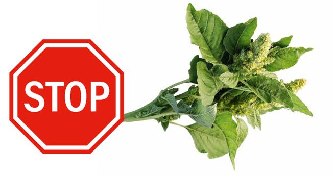 STOP dla chwastów