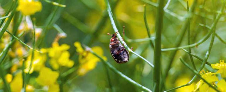 Szkodliwe owady