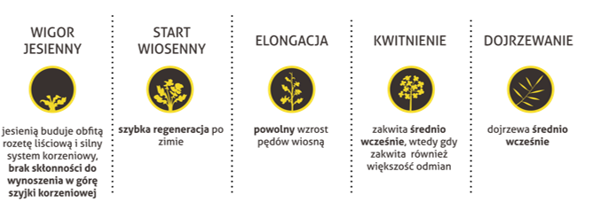 Nowa odmiana nasion rzepaku półkarłowego,  nowe odmiany rzepaku 2017