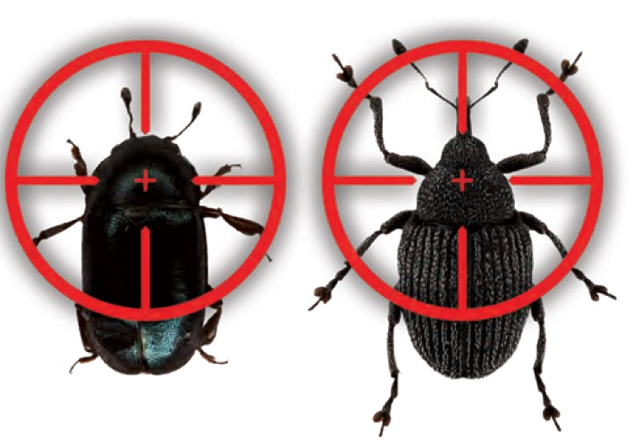 insektycydy do rzepaku - boravi - owady