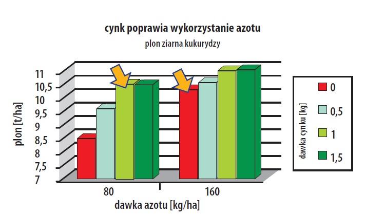 cynk a wykorzystanie azotu