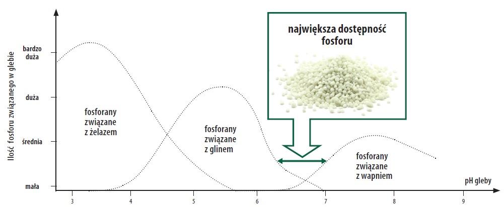 lość fosforu związanego w glebie