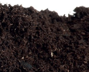 Materia organiczna gleby
