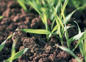 Wiosenne nawożenie nalistne roślin ozimych